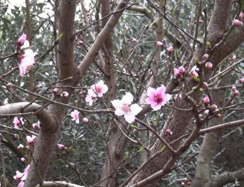 Ritiro di Meditazione di Marzo